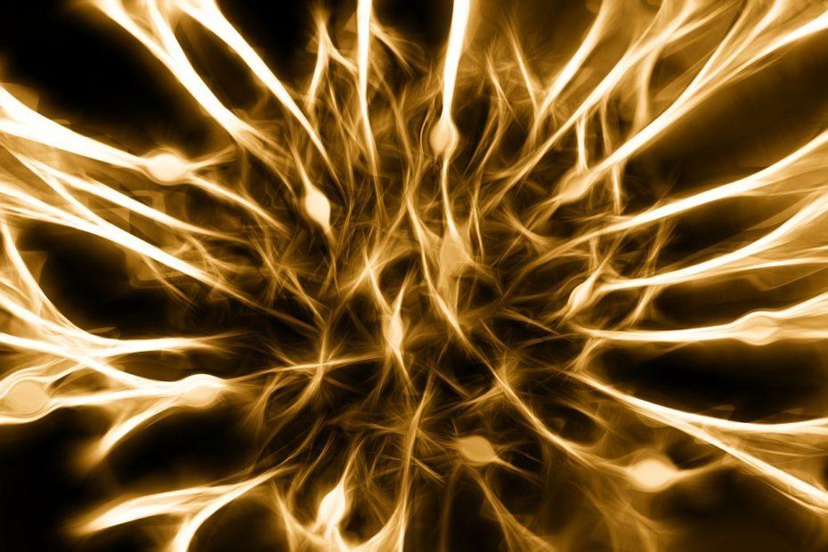 nervous system nerves